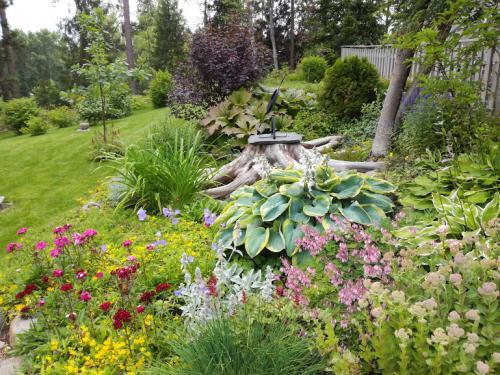 Mimman puutarhassa - Milla Seijamaa